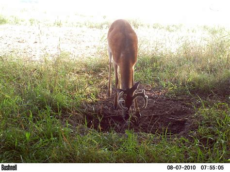 mineral licks for deer jpg 2592x1944